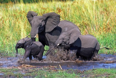 elefante bebé baby elephant with siblings